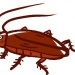夏 害虫 ゴキブリ 対策