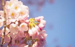 春 イベント